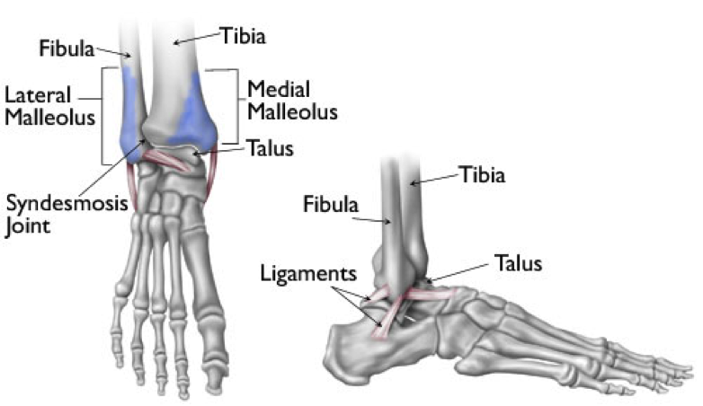ankle-fractures-2